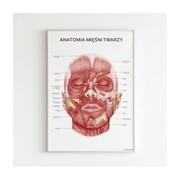 Plakat anatomiczny - MIĘŚNIE TWARZY Marta Pawelec - ilustrator medyczny